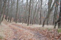 Piękny czarodziejski jesień las w górach Zdjęcia Stock