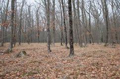 Piękny czarodziejski jesień las w górach Obraz Royalty Free