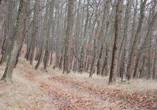Piękny czarodziejski jesień las w górach Obrazy Royalty Free