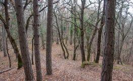 Piękny czarodziejski jesień las w górach Zdjęcia Royalty Free