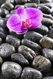 piękny czerń opuszcza orchidei kamieni wodę Zdjęcie Stock