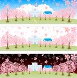 Piękny czereśniowy drzewo ilustracja wektor