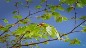 Piękny czereśniowy okwitnięcie Sakura w wiosna czasie nad niebieskim niebem zdjęcia stock