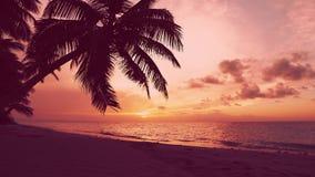 Piękny czerwień świt na drzewko palmowe wyspy plaży raju zbiory wideo