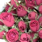Piękny czerwieni róży bukiet Zamyka w górę strzału dla valentine&-x27; s dnia tło obraz stock