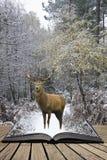 Piękny czerwonego rogacza jeleń w śniegu zakrywał świąteczną sezon zimę fo fotografia stock
