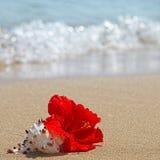 Piękny czerwony poślubnika kwiat na plaży Fotografia Royalty Free
