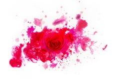 Piękny czerwony real wzrastał od akwarela kleksów Zdjęcia Royalty Free