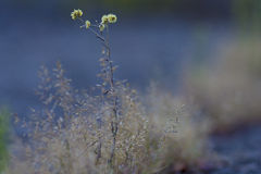 Piękny czuły żółty kwiat Zdjęcie Stock