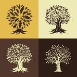 Piękny dębowych drzew sylwetki set Obraz Royalty Free