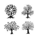 Piękny dębowych drzew sylwetki set Zdjęcie Royalty Free