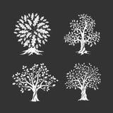 Piękny dębowych drzew sylwetki set Obraz Stock
