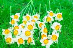 Piękny daffodils kłamstwo Obraz Stock