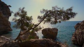 Piękny denny skalisty krajobraz ocean słońce promienie na wodzie, Conifer chad woda zdjęcie wideo