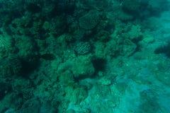 Piękny dna morskiego tło, wspaniały denny dno przez przejrzystej błękitne wody, pojęcie, majestatyczny morskiego życia, podróży i Zdjęcie Stock