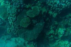 Piękny dna morskiego tło, wspaniały denny dno przez przejrzystej błękitne wody, pojęcie, majestatyczny morskiego życia, podróży i Zdjęcia Stock