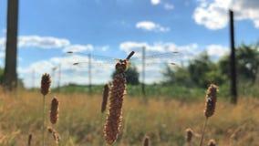 Piękny Dragonfly siedzi w pudełku i Ladybird kiwa zbiory wideo