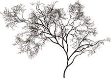 piękny drzewo ilustracja wektor