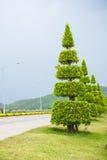 Piękny drzewo po uprawiać ogródek Obraz Royalty Free