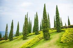 Piękny drzewo po uprawiać ogródek Fotografia Stock