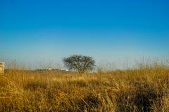 Piękny drzewo ponieważ on ` s samotnie w polu obrazy royalty free