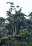 Piękny drzewo w Este kasztelu ruinie obrazy royalty free
