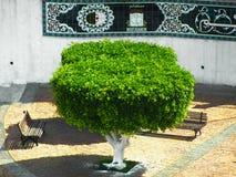 Piękny drzewo w ogródzie zdjęcie royalty free