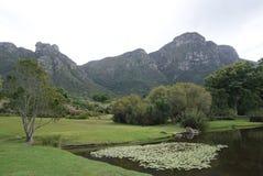 Piękny drzewo w parku w przylądka miasteczku, Południowa Afryka Fotografia Stock