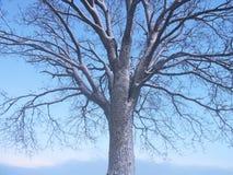 Piękny drzewo w wschodu słońca nieba tle Zdjęcia Stock