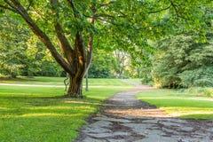 Piękny drzewo w zieleń parku z drogi przemian vertical Zdjęcie Royalty Free
