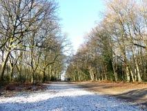 Piękny drzewo wykładał aleję w zimie, Chorleywood błonie obrazy royalty free