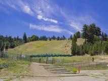 Piękny Duży Niedźwiadkowy jezioro Zdjęcia Royalty Free