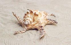 Piękny duży seashell lying on the beach na piasku Zdjęcia Royalty Free
