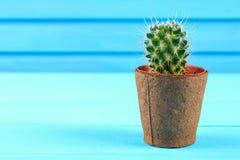Piękny duży zielony kaktus w ceglanym garnku przeciw błękitnej drewno ścianie Obraz Stock