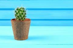 Piękny duży zielony kaktus w ceglanym garnku przeciw błękitnej drewno ścianie Zdjęcie Stock