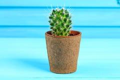 Piękny duży zielony kaktus w ceglanym garnku przeciw błękitnej drewno ścianie Zdjęcie Royalty Free