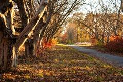Piękny dzień w jesień lesie z słońcem Zdjęcia Stock