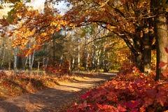 Piękny dzień w jesień lesie z słońcem Zdjęcia Royalty Free
