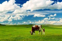 Piękny dziecko krowa i matka fotografia royalty free