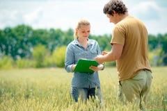 Piękny dziewczyna agronom z nutowej książki pozycją w pszenicznym polu i patrzeć uprawy w średniorolnej mężczyzny ręk, zieleni i  zdjęcia royalty free