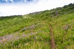 Piękny dziki Karpacki kwiecisty krajobraz zdjęcia stock