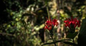 Piękny dziki kwiat w ciemnym tle obraz royalty free
