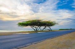 Piękny egzotyczny drzewo pod magiczną złotą godziną Fotografia Royalty Free