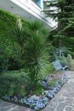 Piękny egzotyczny palmowy yukka na flowerbed blisko metal huśtawki Miejsce dla odpoczynku pod okno dom zdjęcie stock