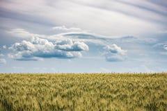 Piękny filtrujący lato krajobraz dojrzewający złoty pszeniczny pole przygotowywający dla żniwa z dramatycznym niebem i chmurami Fotografia Stock