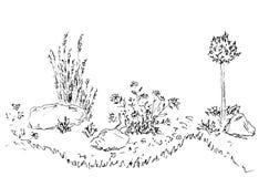 Piękny flowerbed Ręka rysujący nakreślenie na bielu Obrazy Royalty Free