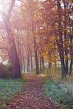 Piękny footpath w parku na mgłowym ranku Zdjęcie Royalty Free