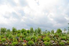 Piękny formalny kwiatu ogród, kopii przestrzeń above obrazy stock