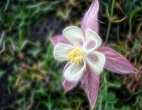 Piękny fractal kwiatu wody poborca lub aquilegia zdjęcie stock