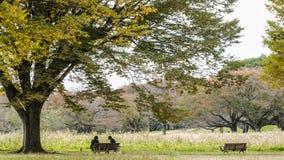 Piękny Ginkgo wzdłuż długości ulica Fotografia Royalty Free